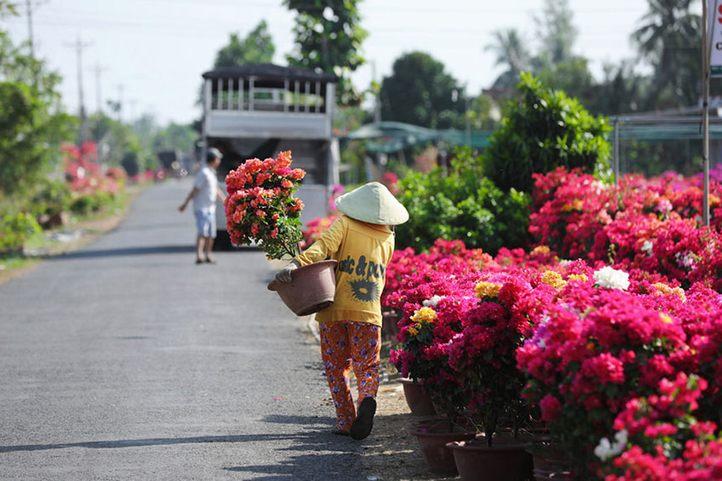 làng hoa Cái Mơn Bến Tre