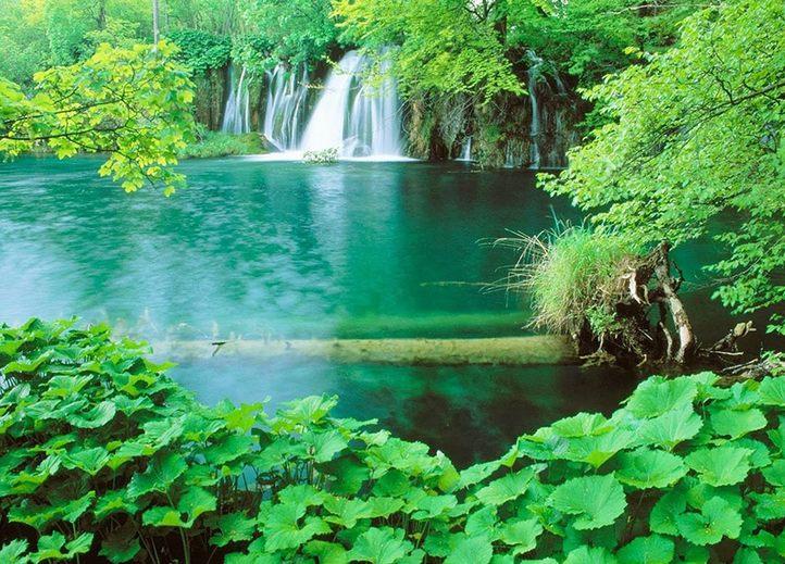 Rừng quốc gia Phú Quốc