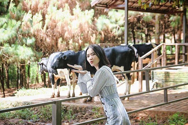 Vinamilk Organic Milk Farm