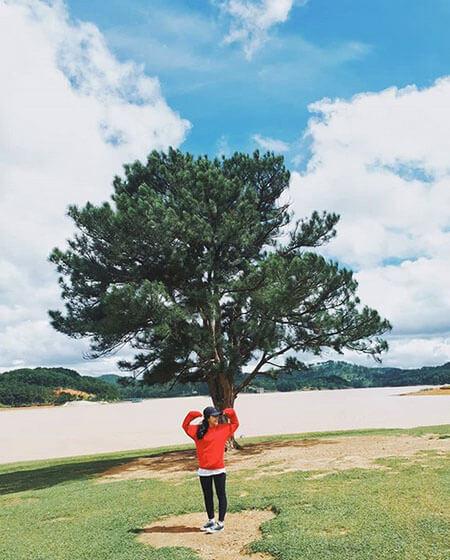 cây Thông cơ đơn Đà Lạt
