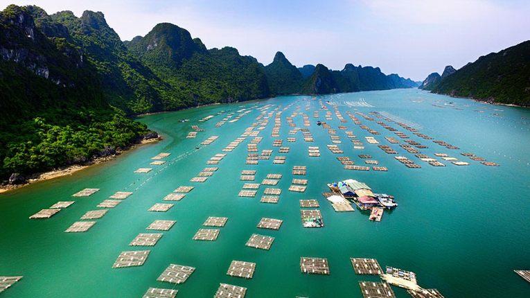 du lịch tour team building Phú Quốc