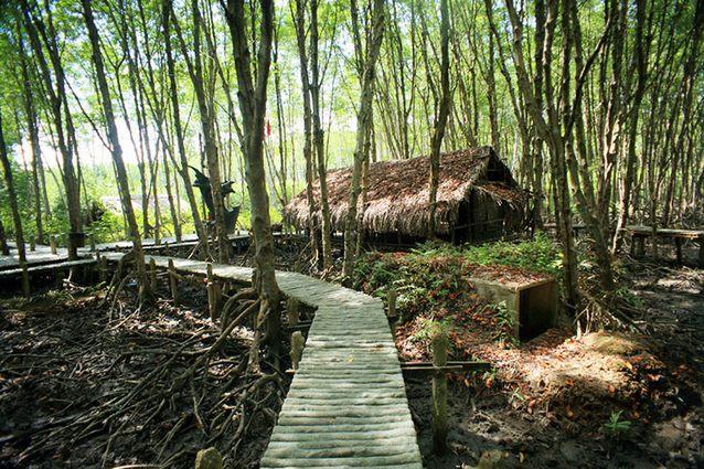 rừng Sác Cần Giờ