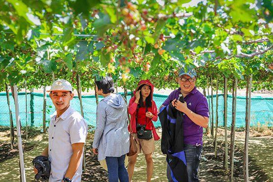 vườn nho Ba Mọi Phan Rang